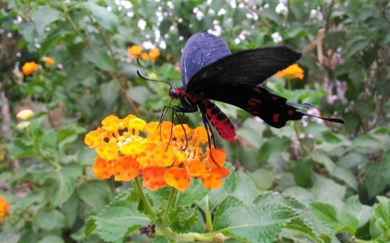 cose da fare con bambini in sardegna come la visita al parco delle farfalle