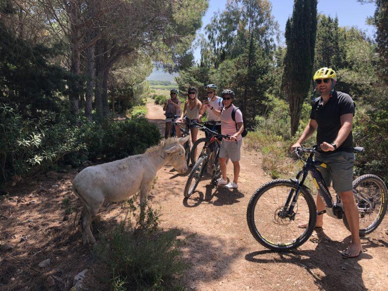 unusual sardinia north west bike in oasi protetta